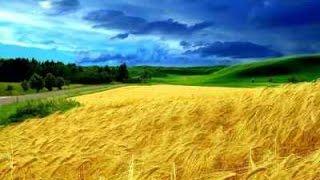 Экологические ресурсы.  Урок биологии.(Видео урок по теме