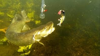How to film underwater 50+ best pike attacks 2015. Fishing wt lures. Рыбалка щука атака под водой.