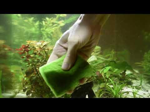 Чем почистить стекло аквариума от водорослей.