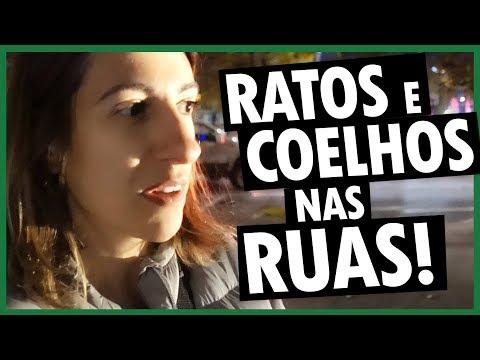 VIMOS RATOS e COELHOS SOLTOS PELAS RUAS de SEATTLE, ESTADOS UNIDOS - DIÁRIO DE VIAGEM - Vlog Ep.120