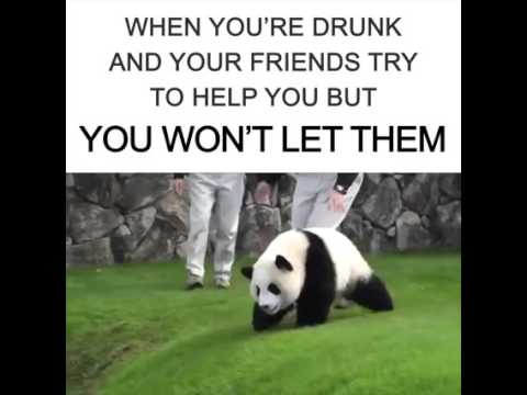 Funny drunken panda fail youtube funny drunken panda fail voltagebd Image collections