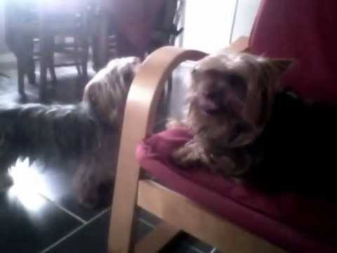 Angry Dog vs Stupid Dog !!