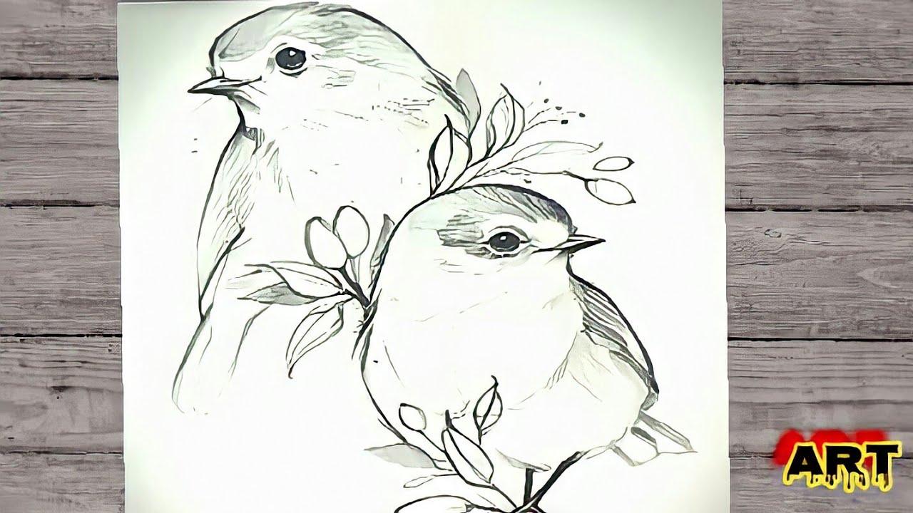 رسم طيور كيفية رسم عصفورين رسم عصفور علي غصن رسم عصفورين بالرصاص Youtube