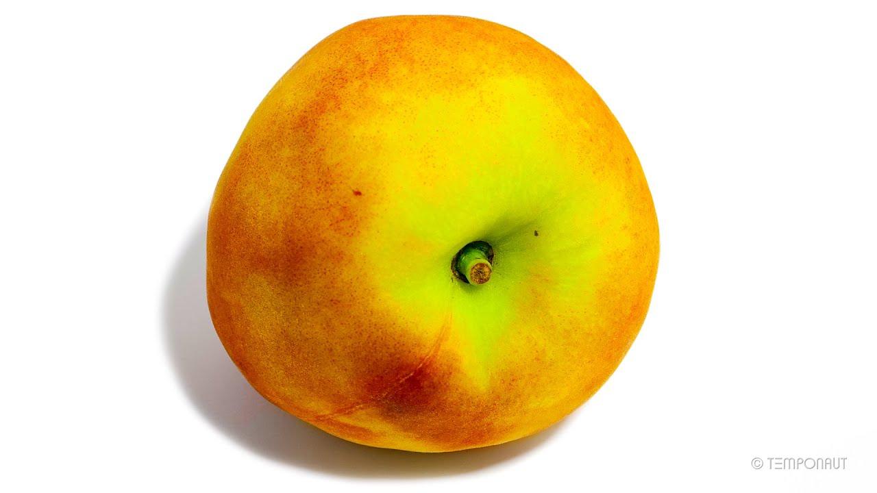 Rotting Peach Time-Lapse
