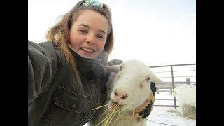Animal Morning Routine: Farm Animals 2019