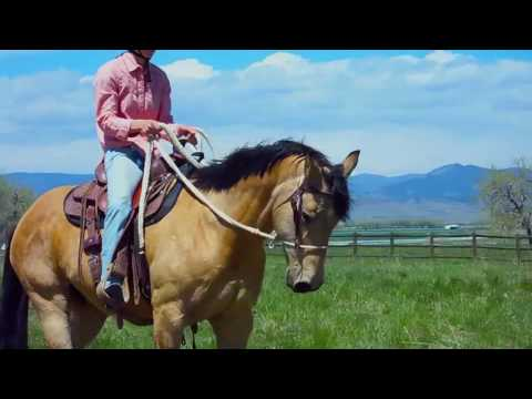 Colorado Horse Rescue - Cheyenne: From Perish to Partnership