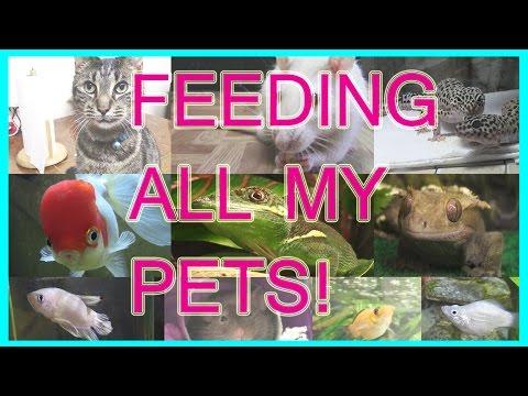 FEEDING ALL MY PETS!( 19+ PETS)  -Pet Adventures