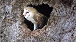A year in the life of adorable owl babies