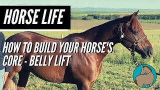 How to Apply a Belly Lift - Horse Life - Episode 12