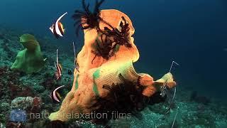 3 HOURS of Amazing Colorful Reef Sea Life  UHD 4K No Music Tahiti, Raratonga, Indonesia