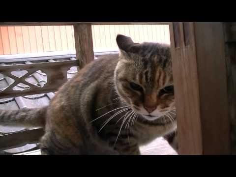 本気度100%怒りの猫パンチ