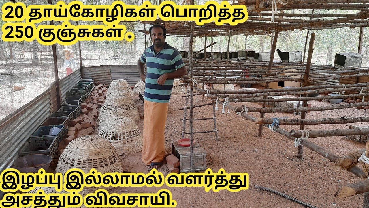 Download கோழி குஞ்சுகளைப் பாதுகாப்பது எப்படி/kozhi kunju paathugappu murai.
