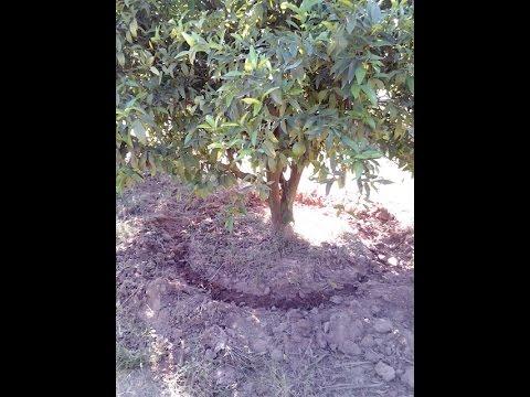 HKCWD AE DEMO FARM IRRIGATION SYSTEM, AGADIR, MOROCCO