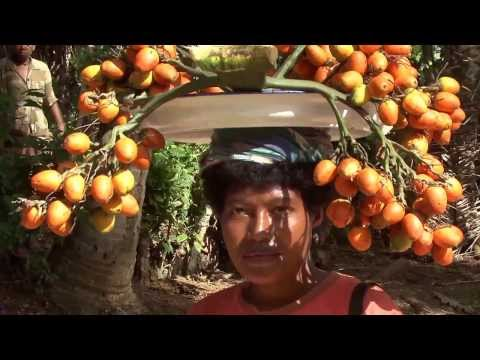 Kirivina Village  by Global Vision Movie Papua New Guinea