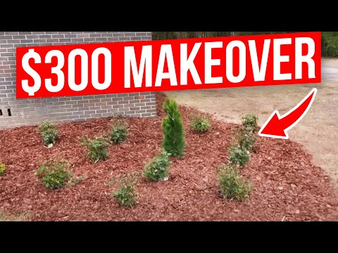 Front Yard Landscaping Project on a Budget