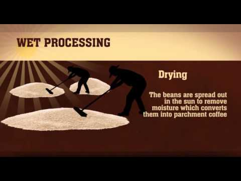 The Colombian Coffee Process