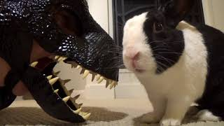 Rabbit eating from dinosaur's mouth!