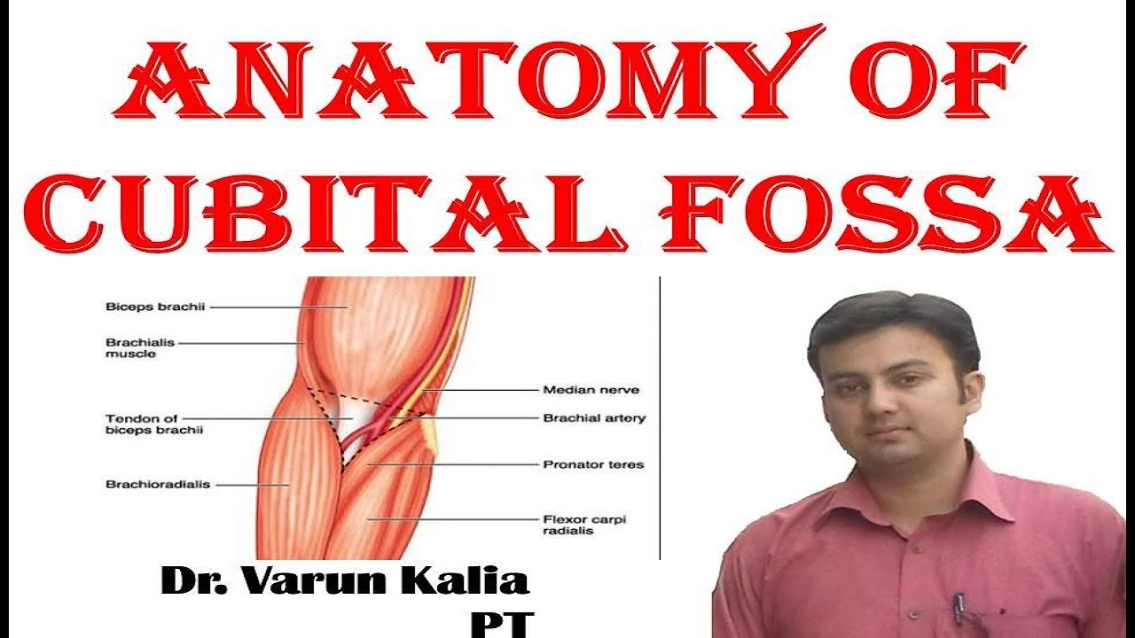 Anatomy Of Cubital Fossa By Dr. Varun Kalia PT - YouTube