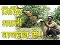 Kerala में रहता है सांपों पर राज करने वाला शख्स | Snake man | Asal News