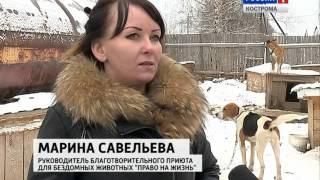 Помогите костромскому приюту бездомных животных
