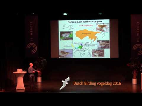 Identification of vagrant Leaf warblers - dr. Per Alström 20