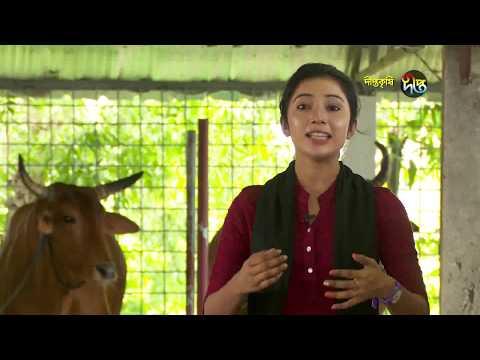 Deepto Krishi/দীপ্ত কৃষি - গরু মোটাতাজাকরণ/নরসিংদী, পর্ব ৬১