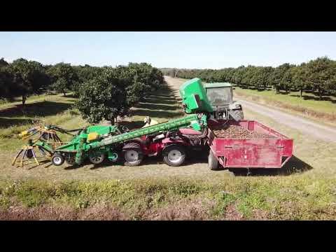 MACADAMIA Harvest On Antonio Carraro Tractors
