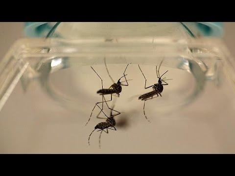 US Health Officials Warn Of Mass Zika Virus Infections In Puerto Rico
