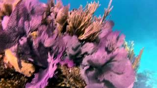 Bermuda Triangle Shipwreck Snorkeling