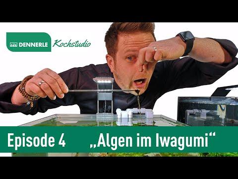ALGEN IM IWAGUMI NANO CUBE! (Update Video) | Aquarium nach Rezept Folge 4 | DENNERLE