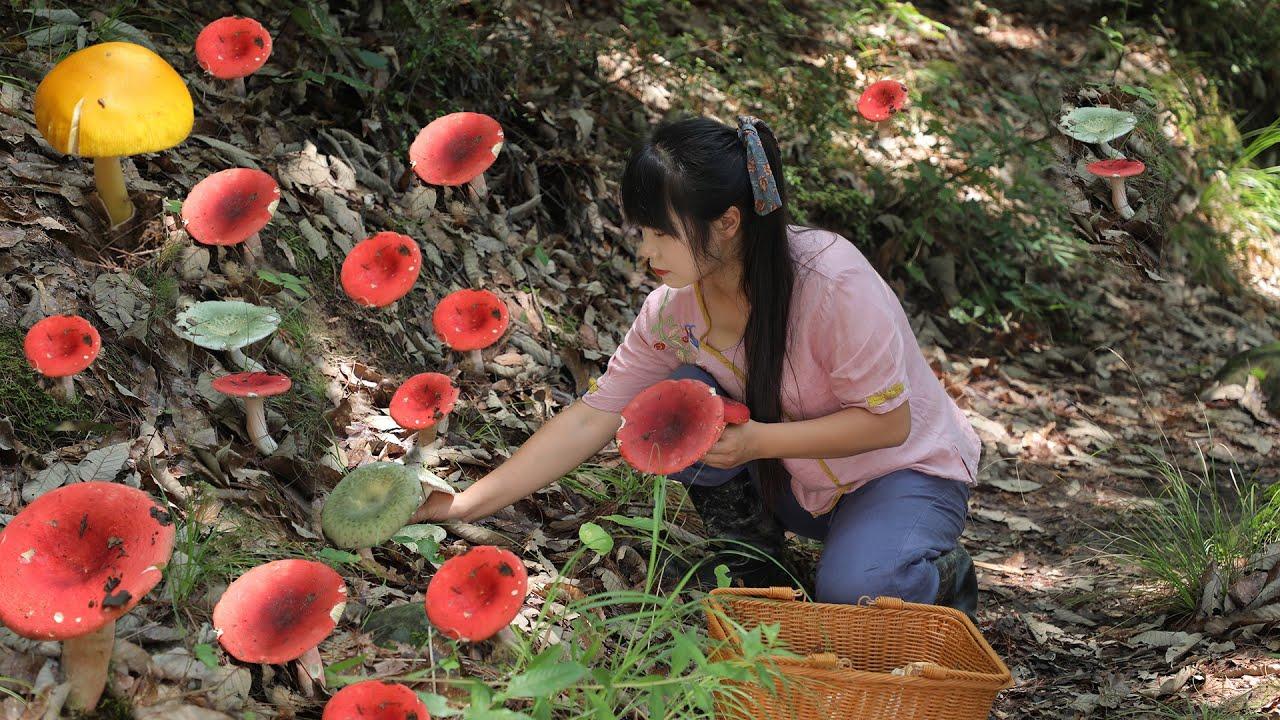 【二米炊烟】Wild Mushrooms 闖進高山森林裡找了7種野生菌,烹飪成美味的蘑菇宴