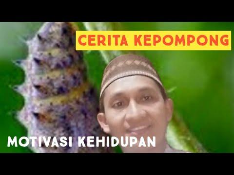 cerita kepompong, motivasi kehidupan - YouTube