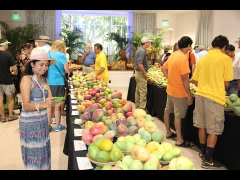 ❤️International Mango Festival 2015 at Fairchild Homestead Miami Florida