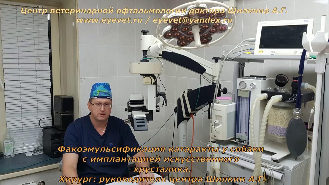 Факоэмульсификация катаракты у собаки с имплантацией искусственного хрусталика