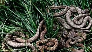 Кеймада Гранди остров смерти остров змей