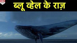Blue Whale के इन Secrets को जानकर आपके होश उड़ जाएंगे