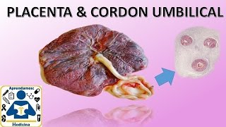 Placenta y cordon umbilical