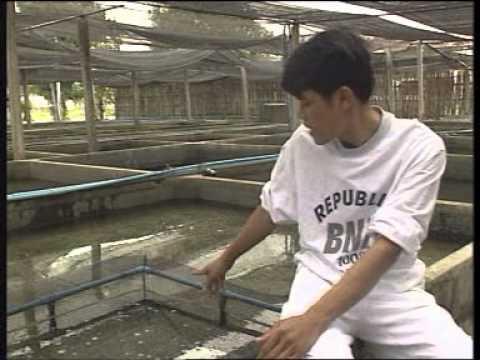 ปลาหางนกยูง ราชินีแห่งปลาตู้