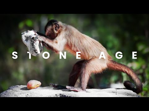 Monkeys And Apes Have Entered The Stone Age