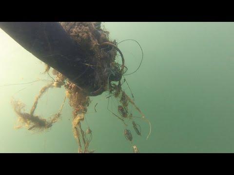 подводная охота вред