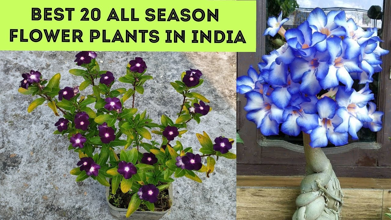 All Season Flower Plants In India Plant Names With Pictures Youtube