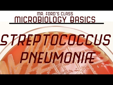Streptococcus pneumoniae and  Bacterial Meningitis : Microbiology Lectures