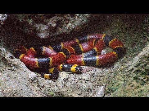How To Spot Venomous Snakes In Arkansas