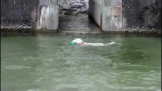 白州の川で泳いできました。 綺麗な水です。