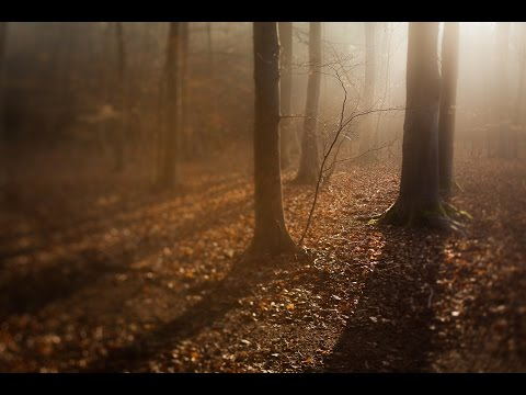 Advanced Photography: Landscapes | Photographing Woodland Scenes
