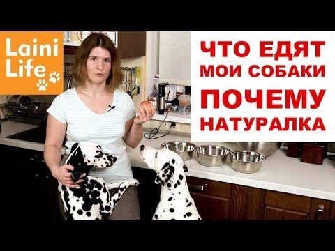 Чем я кормлю собак   сухой корм Vs натуралка