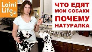 Чем я кормлю собак | сухой корм vs натуралка