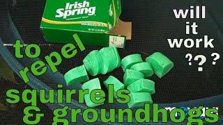 7/27/2018: making Irish Spring soap rodent repellent vectors