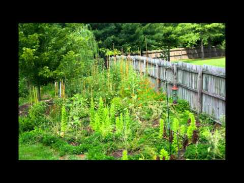 A Victory Garden Slideshow: July 2011