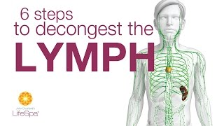 6 Steps to Decongest the Lymph  |  John Douillard's LifeSpa